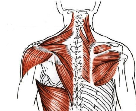 how to manual muscle test serratus anterior