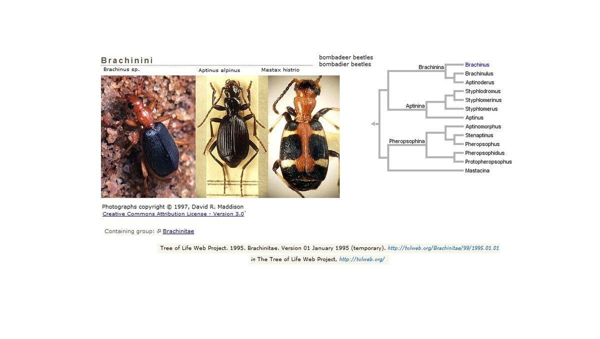 a manual of common beetles of eastern north america