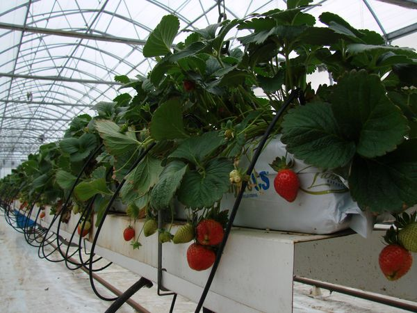 can i manually water my hydroponic plants