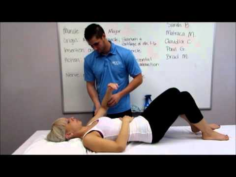upper trap manual muscle test